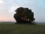Der »Hängehügel« — eine Richtstätte des ehemaligen Klosters und Amtes Sittichenbach, Ldkr. Mansfelder Land (Foto: U. Tichatschke).